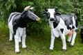 Корова U07493